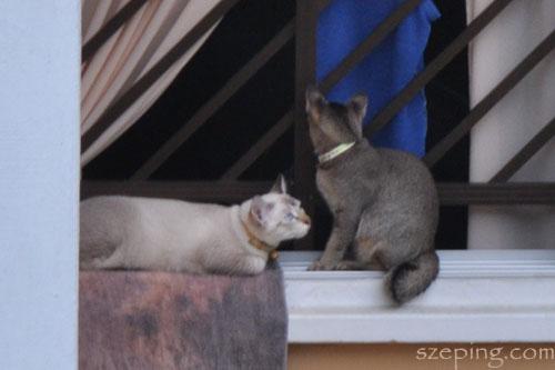 hdb_cat1.jpg