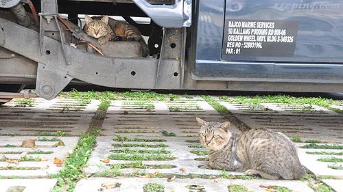 2_cats_wake.jpg